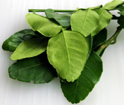 Kafir lime leaves